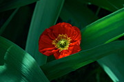 Byron Varvarigos Metal Prints - Green Loves Red Loves Green Metal Print by Byron Varvarigos