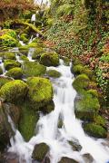 Colors Of Autumn Prints - Green Moss Along Small Waterfall Happy Print by Craig Tuttle