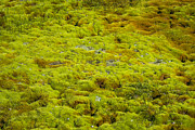 Patricia Hofmeester - green moss