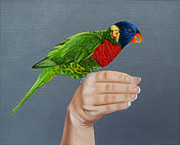 Fauna Originals - Green Naped Lorikeet by Jason M Silverman