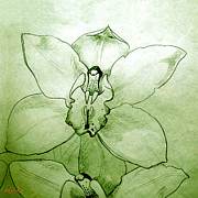 Botanic Drawings - Green Orchid by Patricia Howitt
