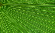 Green Palm Abstract Print by Kathleen Struckle