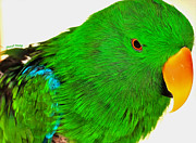 Talking Photo Posters - Green Parrot Poster by Cheryl Young