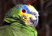 St. Lucia Parrot Prints - Green Parrot Print by Duane McCullough