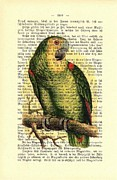 Parrot Art Print Mixed Media - Green Parrot by Little Vintage Chest