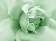 Green Florals Prints - Green Pastel Rose Flower Print by Jennie Marie Schell