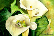 Calla Lilies Framed Prints - Green Peace Framed Print by Lyse Anthony