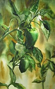Pepper Paintings - Green peppers from our garden by Alfred Ng