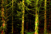 Mysterious Digital Art - Green Pine Forest by Thomas R Fletcher