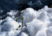 Survival Originals - Green plant in the snow by Nelieta Mishchenko