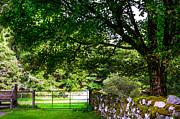 Jenny Rainbow - Green Property. Wicklow. Ireland