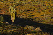 Desert Wash Framed Prints - Green Saguaro Hills 2 Framed Print by Dave Dilli