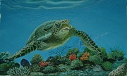Pravin  Sen - Green Sea Turtle