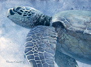 Fish Underwater Paintings - Green Sea Turtle by Randall Scott