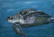 Tom Blodgett Jr - Green Sea Turtle
