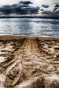 Green Sea Turtle Photos - Green Sea Turtle Track by Douglas Barnard