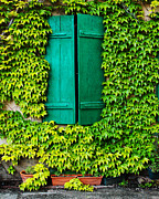 Alsace Framed Prints - Green Shutters and Ivy in Riquewihr France Framed Print by Greg Matchick