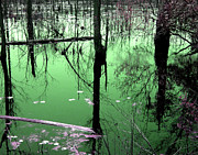 Joseph Tese - Green Swamp
