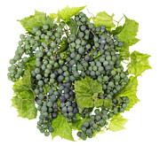 Aleksandr Volkov - Green sweet grapes ball