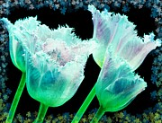 Flower Design Prints - Green Tulip Glow Print by Debra  Miller
