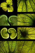 Still Life Photographs Originals - Green universe by Van K Bazaldua
