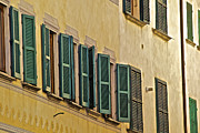 Italian Window Prints - Green Window Shutters of Florence Print by David Letts