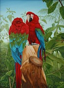 Macaw Art Paintings - Green Winged Macaws   by Sid Ball