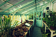 Frame House Photos - Greenhouse of Charles Darwin by Chevy Fleet