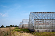 Cultivate Framed Prints - Greenhouses Framed Print by Antony McAulay