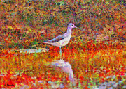 Colrful Framed Prints - Greenshank Framed Print by George Rossidis