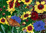Blank Greeting Card Prints - Greeting Card Butterfly Wildflowers Floral 2 Print by Walt Curlee