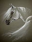White Arab Pastels Prints - Grey arabian horse Print by Angel  Tarantella