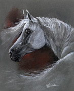 White Horses Pastels Framed Prints - Grey arabian horse soft pastel drawing 13 04 2013 Framed Print by Angel  Tarantella