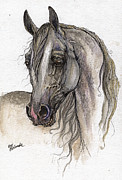 Horse Drawing Framed Prints - Grey Arabian Horse Watercolor Painting 3 Framed Print by Angel  Tarantella