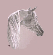 Arabian Pastels Prints - Grey Arabian Print by Jeanie Beline