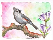 Titmouse Paintings - Grey bird Tufted Titmouse by Carlos G Groppa