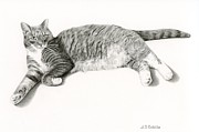 Kitten Prints Drawings Prints - Grey Cat- Frieda Print by Sarah Batalka