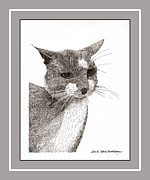 Grey Drawings Framed Prints - Grey cat number 12 Framed Print by Jack Pumphrey