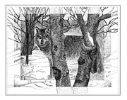 Winter Prints Drawings - Grey Wolf in winter by Jack Pumphrey
