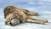 Cats Resting Posters - Grey Wolf Painting Poster by David Stribbling