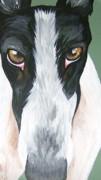 Greyhound Eyes Print by Leslie Manley