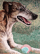 Greyhound Mixed Media Framed Prints - Greyhound Framed Print by Heidi Hooper