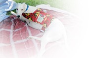 Greyhound Rescue 5 Print by Jackie Bodnar