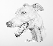 Kaelin Drawings Posters - Greyhound Poster by Roy Kaelin