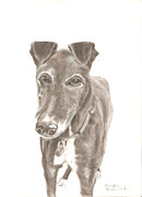 Commision Art - Greyhound by Sandra Muirhead