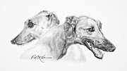 Pencil Drawings Of Pets Posters - Greyhounds for Two Poster by Roy Kaelin