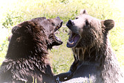 Kodiak Prints - Grizzlies At Play Print by Athena Mckinzie
