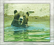 In The Bath Digital Art Framed Prints - Grizzly Bath Framed Print by Walter Herrit