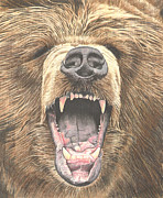 Growling Drawings Framed Prints - Grizzly Bear Framed Print by Vicki Knoll