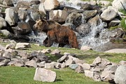Photographs Mixed Media - Grizzly Enjoying a Hot Day - West Yellowstone by Photography Moments - Sandi